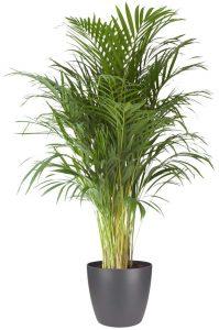 plante artificiel pour bureau